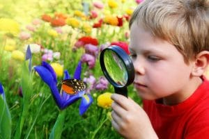 Six years old boy in the spring garden observing a butterfly on flower through a magnifying glass.