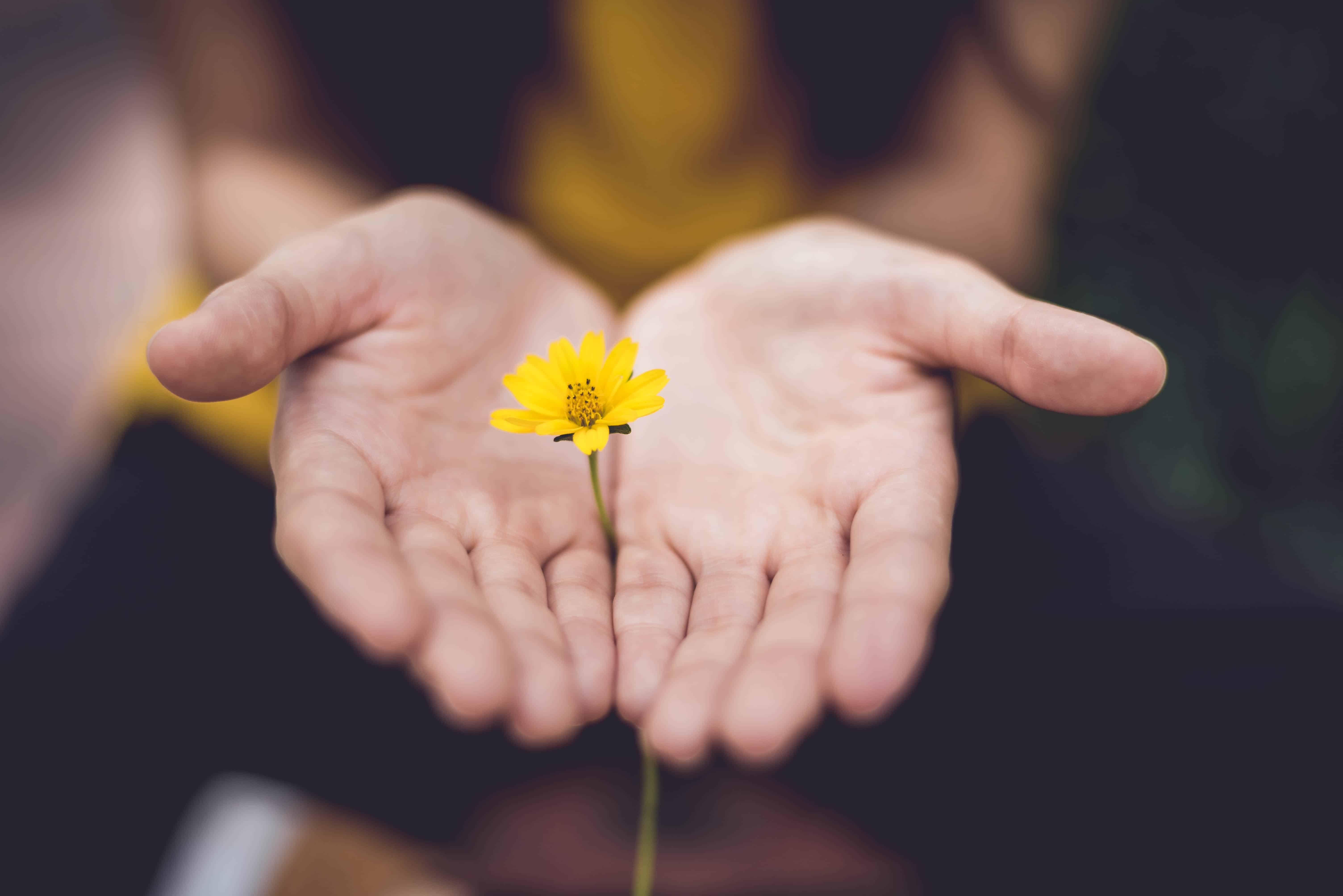 meditative hands and flower